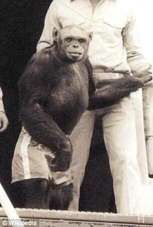Szympans Oliver
