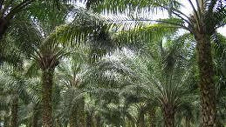 World Bank to assist oil palm processors in Edo - FADAMA Coordinator