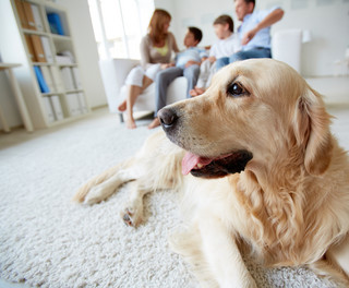 Gdy pies nieustannie szczeka, jego właściciel poniesie karę
