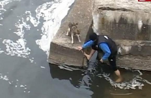 Pas je bio zarobljen u ledenoj vodi
