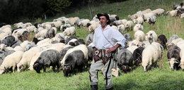 Owce schodzą z hal. To koniec oscypków w górach