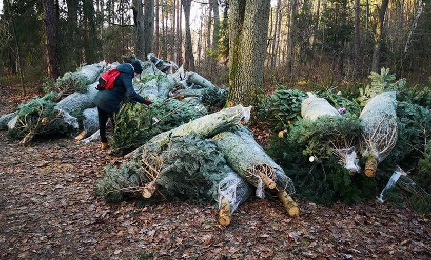 Porzucone choinki w Lesie Sękocińskim