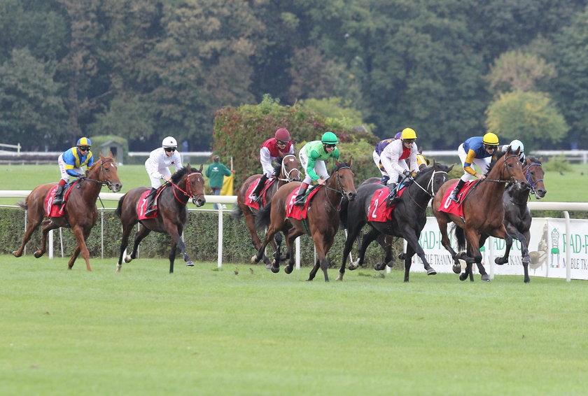 Czarna niedziela na Służewcu, po wielkiej gonitwie uśpiono aż trzy konie!