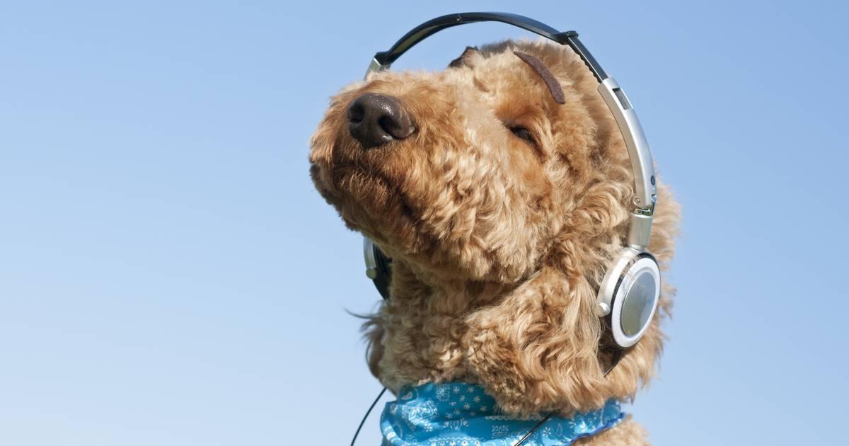 Spotify macht jetzt Playlists für deinen Hund
