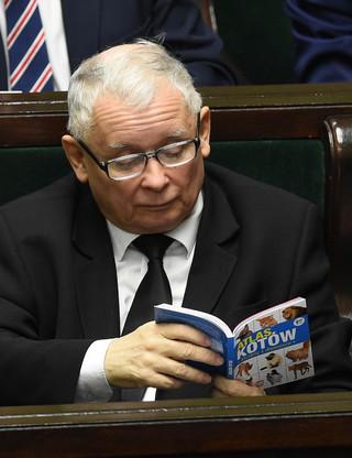 Kaczyński czyta w sejmie książkę o kotach. Rzeczniczka PiS: Niech ta lektura zachęca do wsparcia schronisk