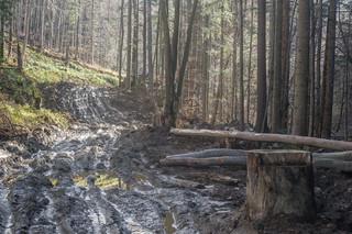 Konferencja o ochronie lasów bieszczadzkich z wycinką w tle. Co dzieje się przy granicy Bieszczadzkiego Parku Narodowego?