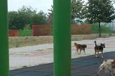 mirijevo psi lutalice