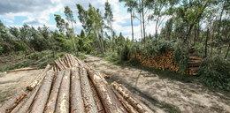 Wiemy, ile drzew musi wyciąć Szyszko, by zapłacić unijną karę