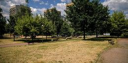 Trawniki w miastach przypominają klepiska. Wszystko przez kosiarzy