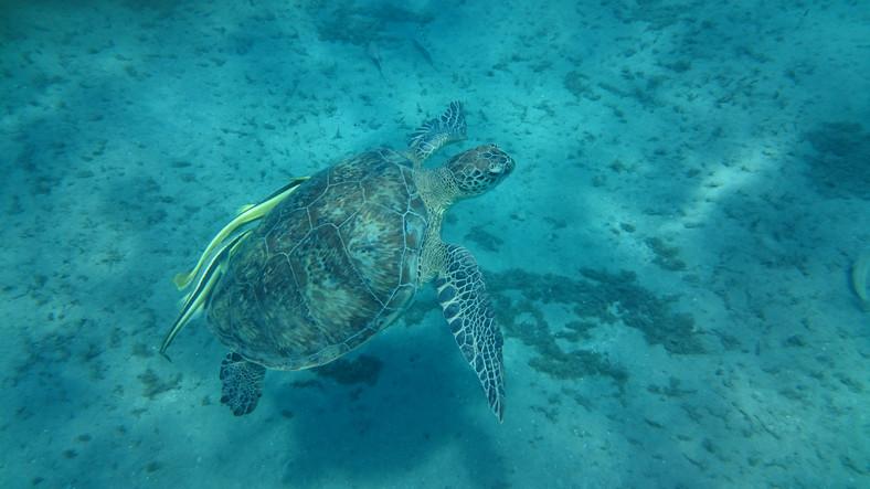 Żółw sfotografowany aparatem Sony Xperia Z3 plus