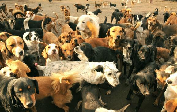 Radoznali psi u niškom Azilu