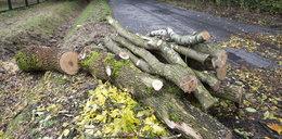 Ofiara wycinki drzew. Zmarł po uderzeniu konarem