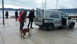Uznemirujući prizor u Tivtu: Pitbul RASTRGAO pudlicu turiste iz Srbije