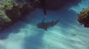Nurek uratował rekina. Znalazł zwierzę, które miało wbite w głowę nóż