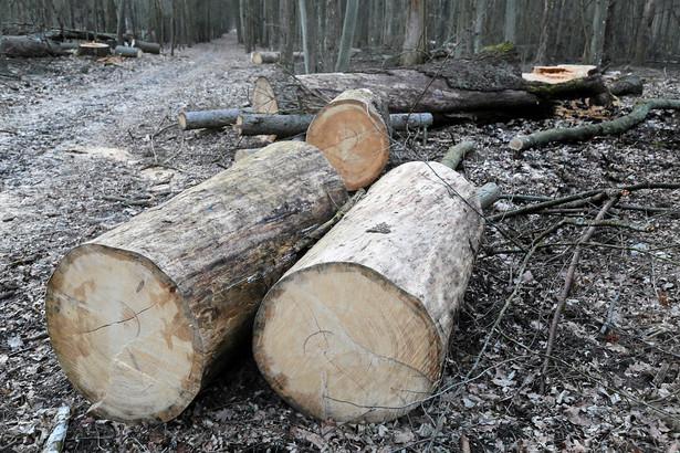 Niektórzy obwinieni odpowiadają za to, że - wbrew żądaniu osoby uprawnionej - nie opuściły lasu, inni - za wjeżdżanie pojazdami bez zgody właściciela lub posiadacza lasu.