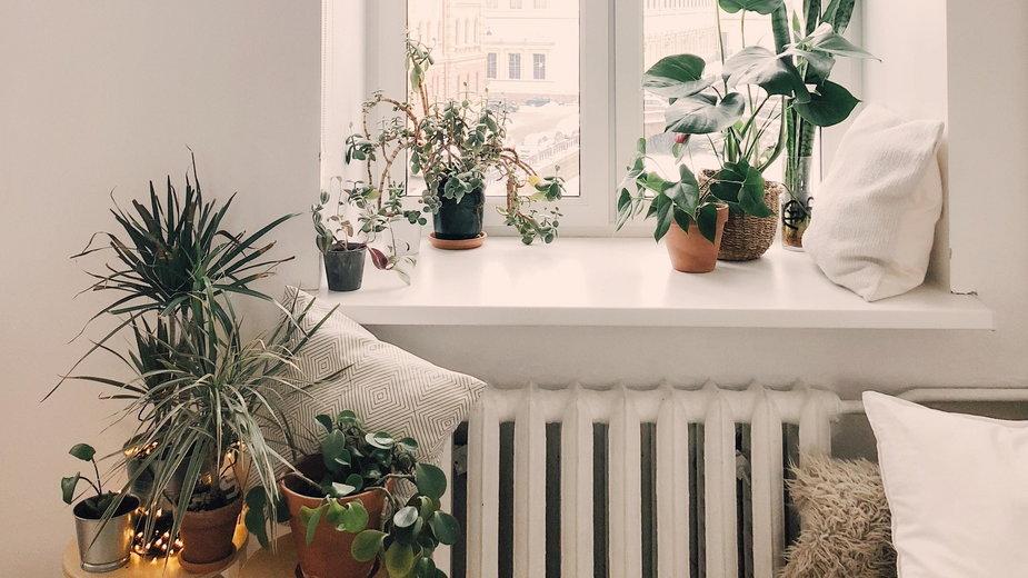 Nie rób tego swoim roślinom!