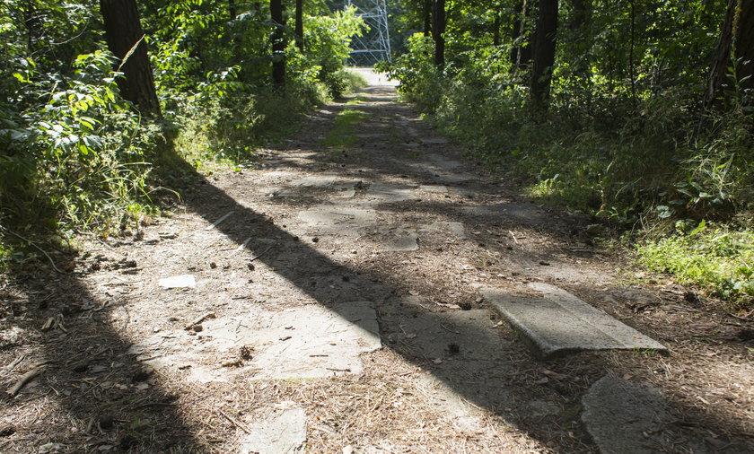 Leśna droga wyłożona nagrobkami
