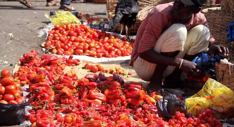 Science says chilli Pepper (known as ata ijosi or sombo in Yoruba language) can reduce your risk of dying from heart attack and stroke. This long red pepper is used to prepare stews in Nigeria. (The Guardian)