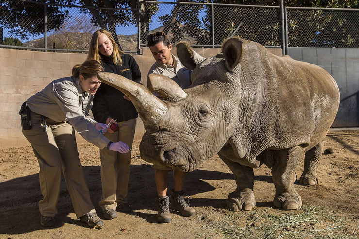 Zbunjen: Nije jasno zašto je nosorog napao ljude u Hetaudi