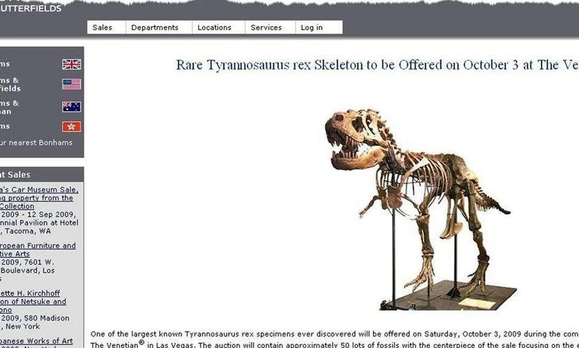 Szkielet dinozaura do kupienia