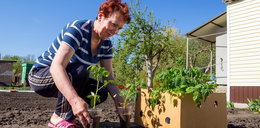 Pracujesz w ogrodzie? Grozi ci śmiertelne niebezpieczeństwo