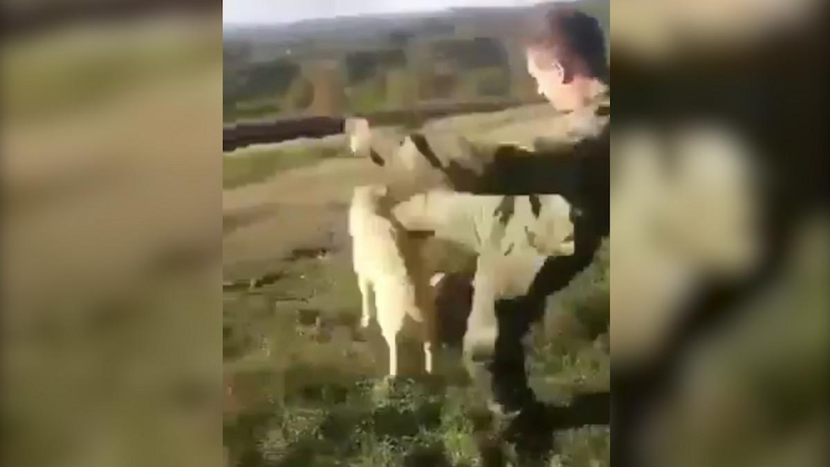 SNIMAK ZGROZIO DOMACU JAVNOST Bivsi vojnik se izivljavao nad psima, njegovi prijatelji sve snimali (UZNEMIRUJUCI VIDEO)