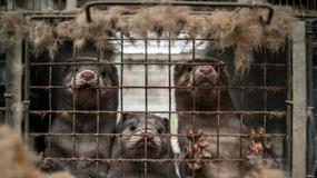 Wielki Marsz dla zwierząt 4 października w Warszawie