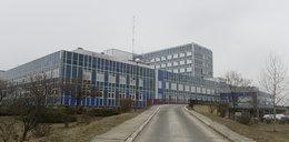 Świńska grypa zabija w Legnicy