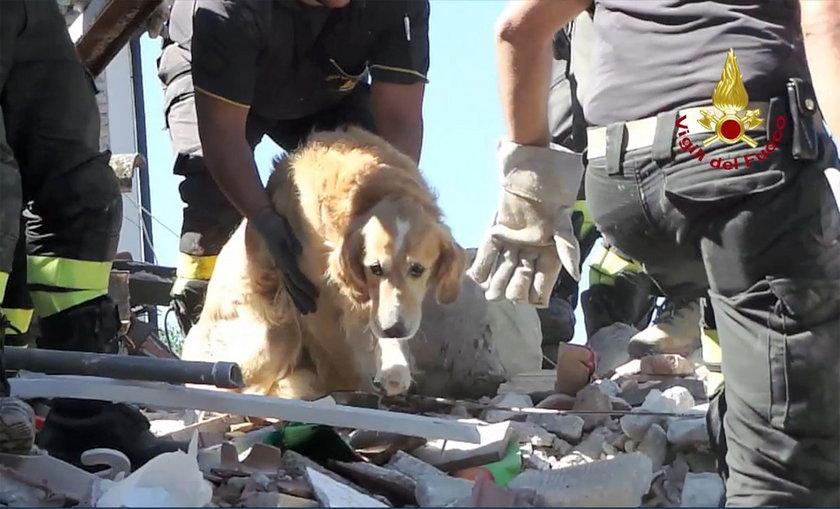 Pies Romeo przeżył 9 dni pod gruzami domu