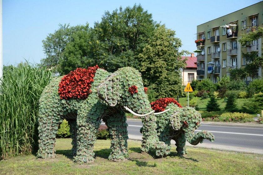 Rozwalone słonie z Przeworska
