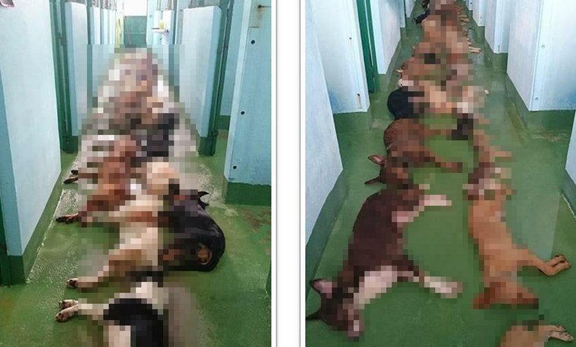 Szokujące zdjęcie. Eutanazja kilkudziesięciu psów w schronisku