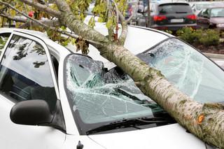 Drzewo zniszczyło samochód. Wspólnota mieszkaniowa poniesie koszty