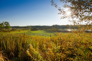 Miało być pole golfowe – będzie las na ok. 60 hektarach