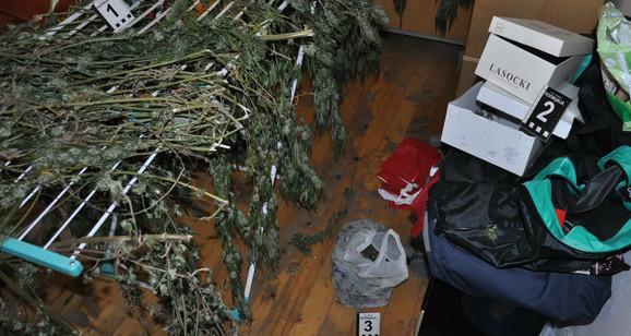 Zaplenjena laboratorija i 24 kilograma marihuane u Nišu
