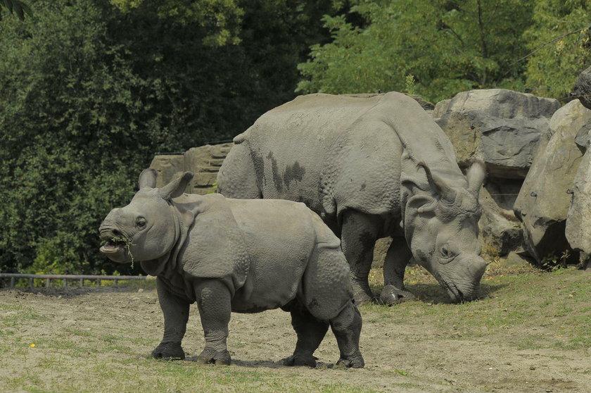 Zoo otwiera swoje bramy