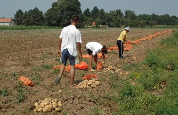 Poljoprivrednici, Požega