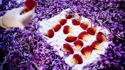 Why saffron is the world's most expensive spice
