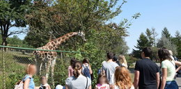 Pracownicy poznańskiego zoo tracą cierpliwość. Goście mieli jeść oplute siano?