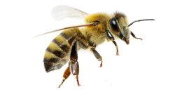 Kiedy alergia zagraża życiu?