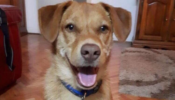 Marijin pas  pronađen