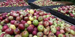 Białoruś nie chce polskich jabłek
