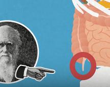 BI: 5 nieprzydatnych części ciała, które pozostały po ewolucji