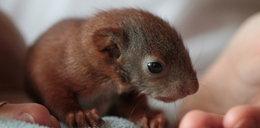 Jestem mamą dla wiewiórki!
