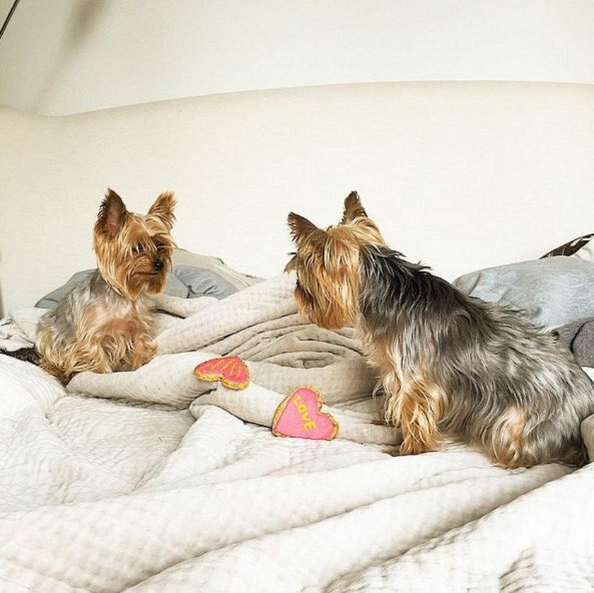 Gwiazdy i ich psy
