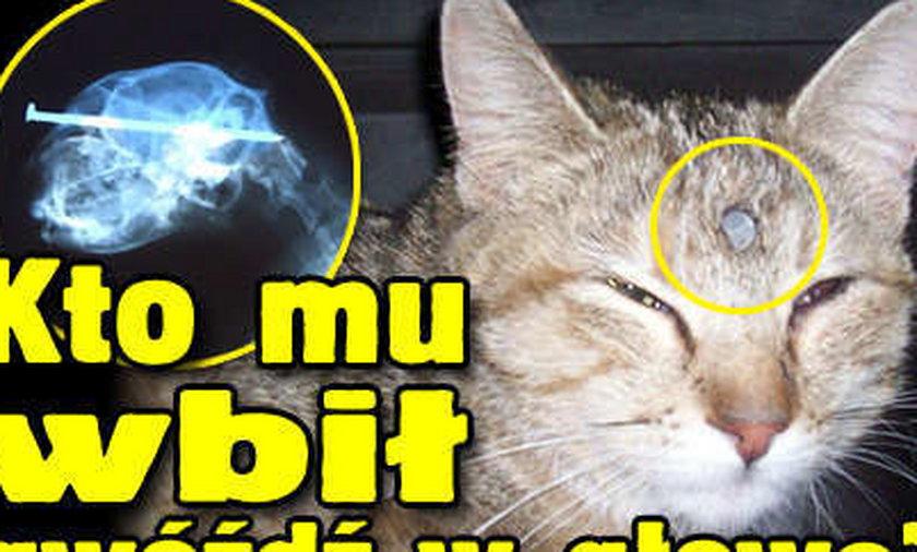 Kotka z gwoździem w głowie. Zdjęcia
