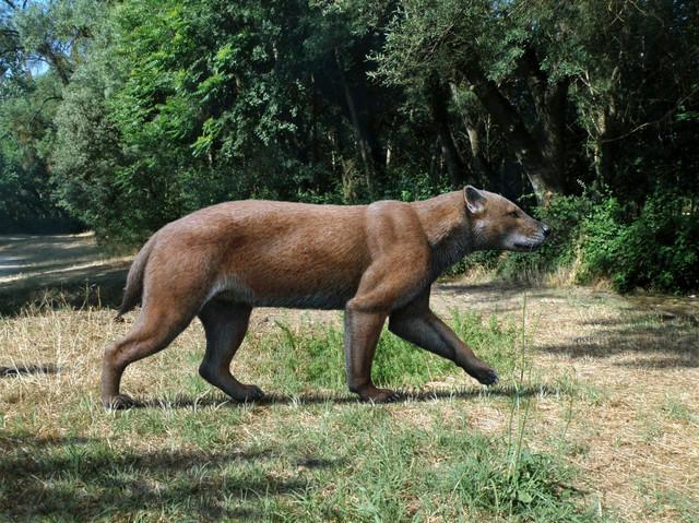 Praistorijski pas-medved