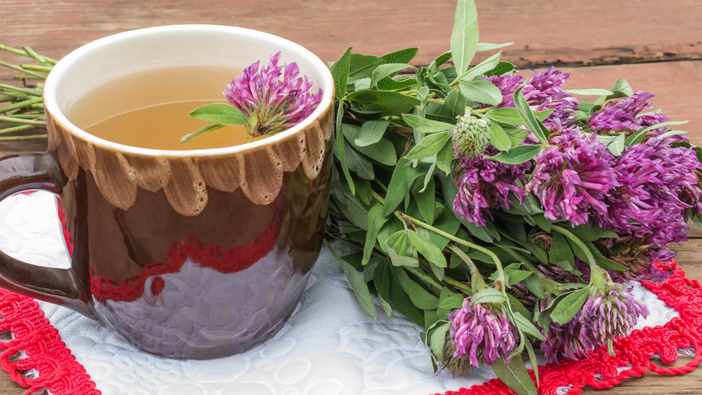 Herbata z czerwonej koniczyny