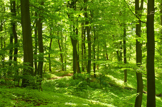 Opłata za wyrąb drzew to koszt pośredni