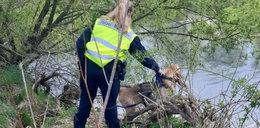 Psy z Niemiec wskazały trop w sprawie Kacperka. Te same miejsca wywąchały polskie czworonogi
