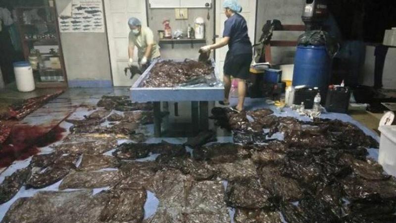 Plastikowe torebki zabiły wieloryba